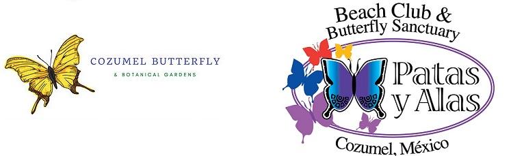 Cozumel Butterflies